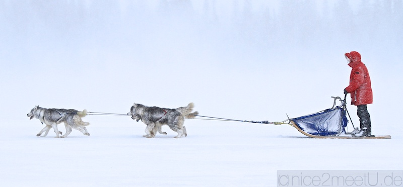Husky Expedition Schweden